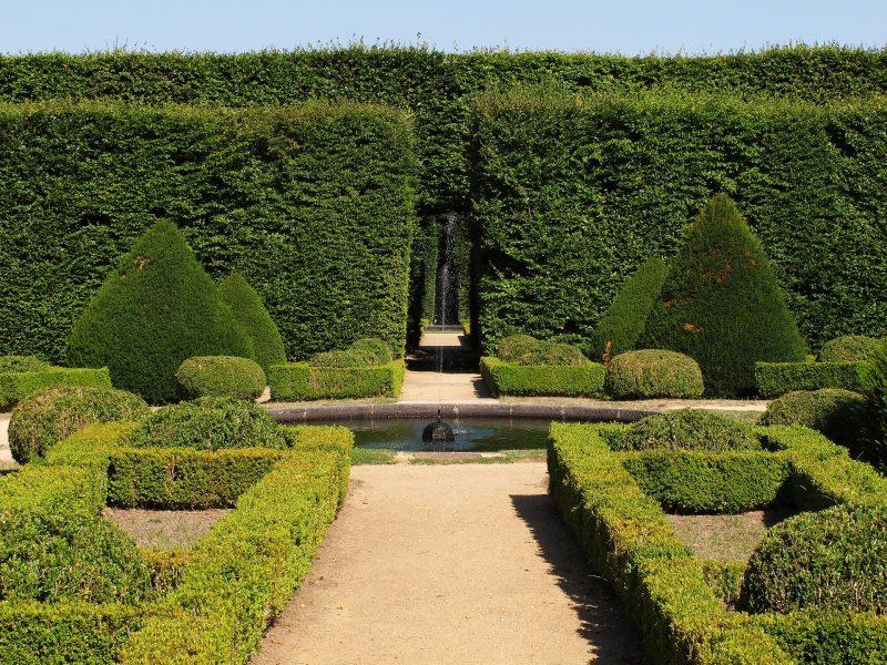 Siepi in un giardino pubblico